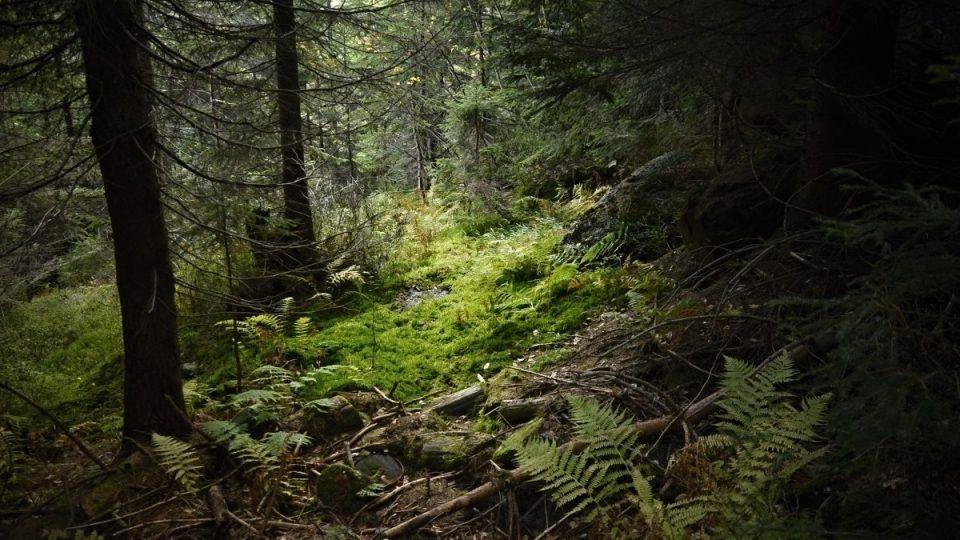 Labský důl - les