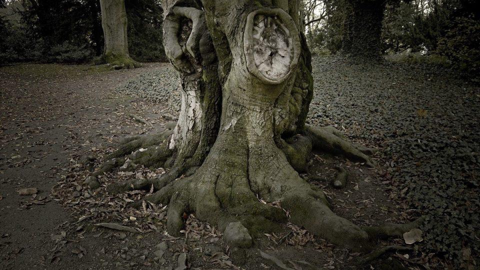 Bizarní stromy v zámeckém parku, okolí Palmového skleníku