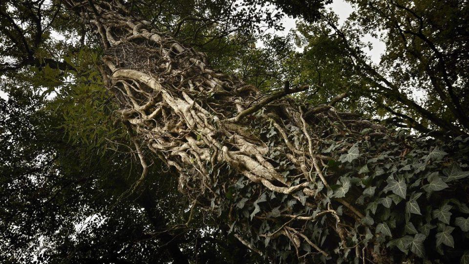 Dřeviny v zámekcém parku