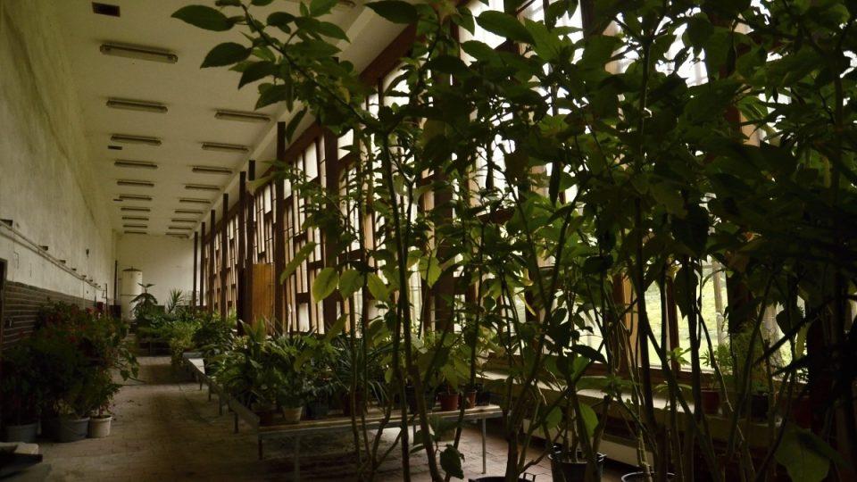 Palmový skleník slouží stále původnímu účelu