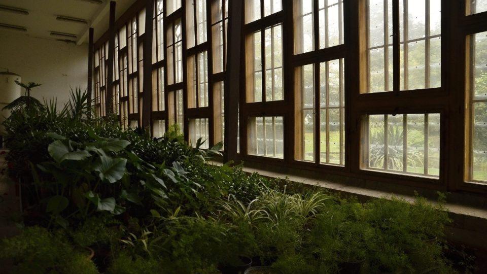 Palmový skleník, zahrada zámku Opočno