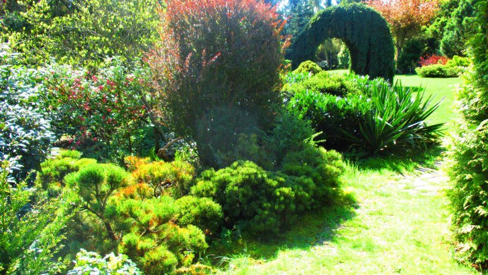 Hra zeleně v zahradě