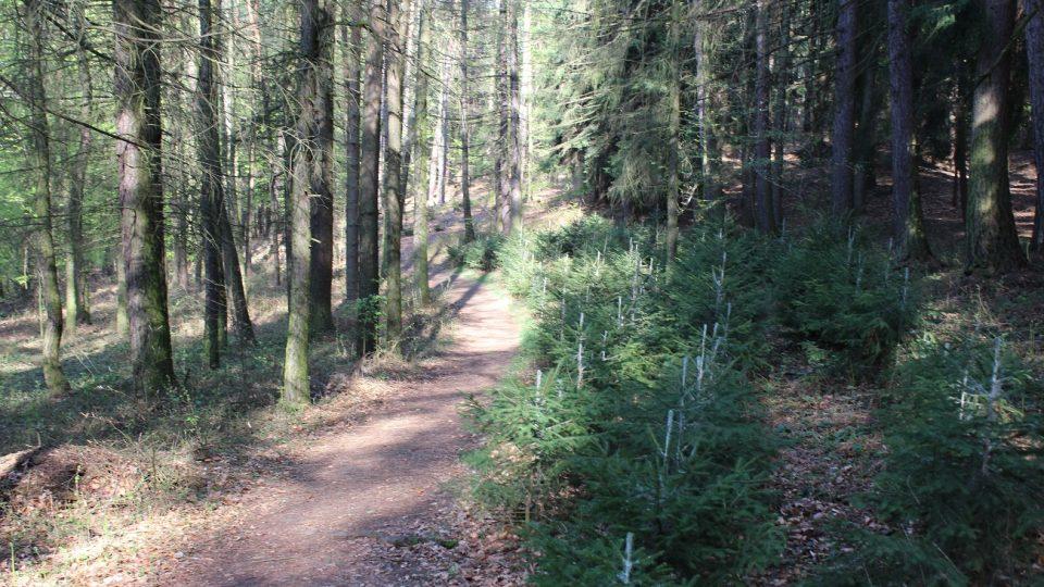 Cesta k lomům vede lesem