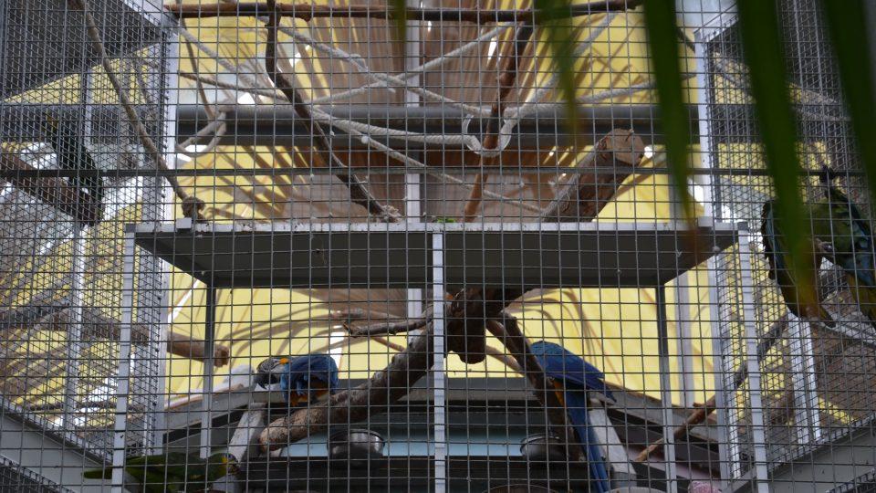 Papoušci jsou lákadlem nejen pro děti
