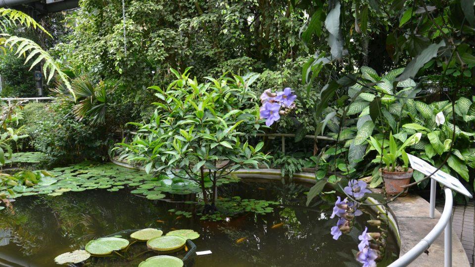 Tropický skleník s jezírkem