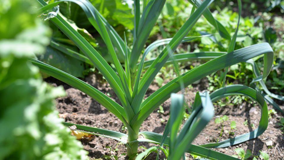 Jana Exnarová používá zeleninu z vlastní zahrady