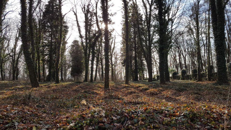 Hroby porostlé břečťanem tvoří vlny
