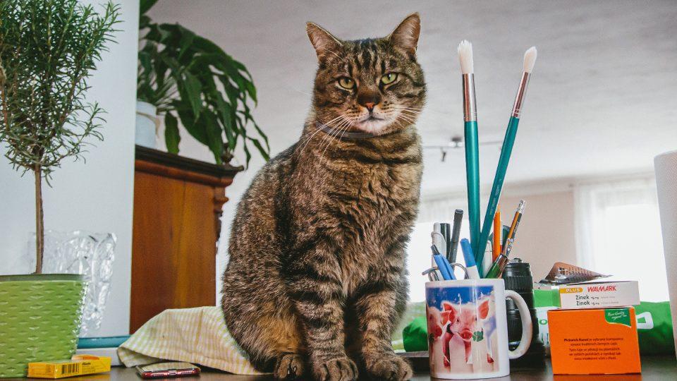 Hana Šimáčková a jedna z jejích koček