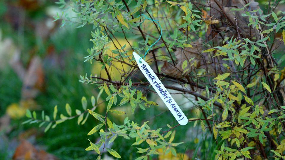 Rostliny opatřujeme cedulkami nebo visačkami