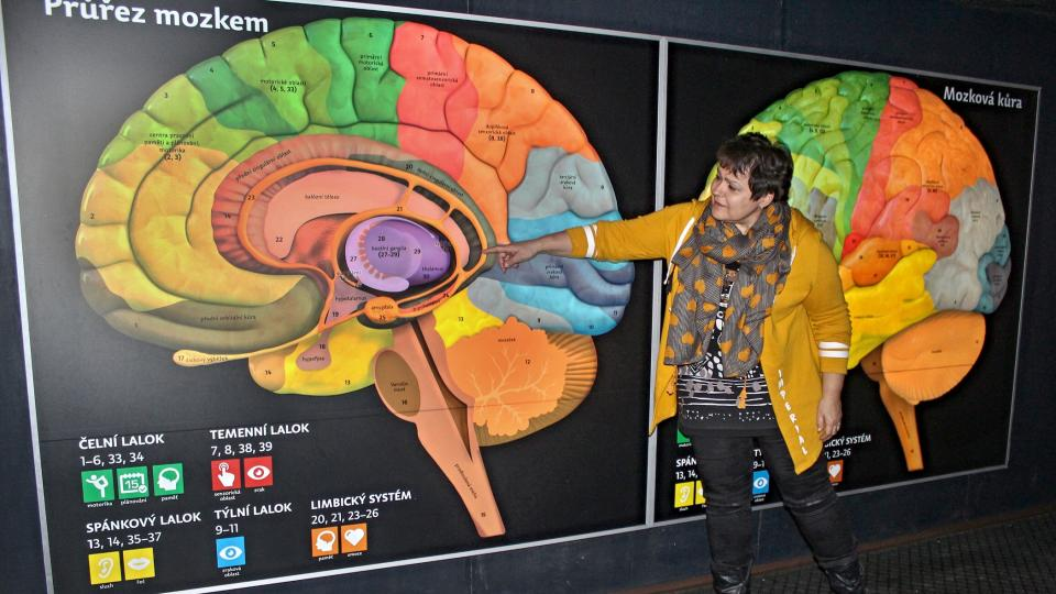 Autorka modelu mozku Ivana Fellnerová uvnitř modelu