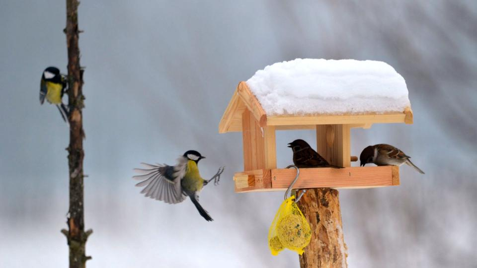 Čím pestřejší stravu ptákům nabídnete, tím více druhů ke krmítku přiletí