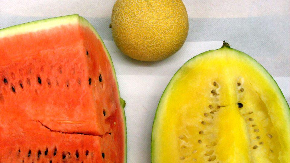 Meloun vodní a meloun cukrový