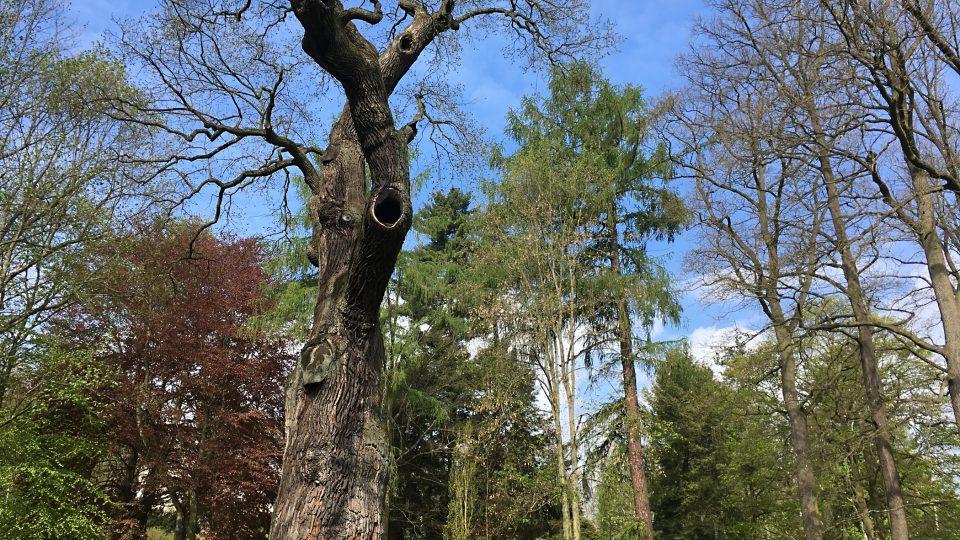 Körnerův dub