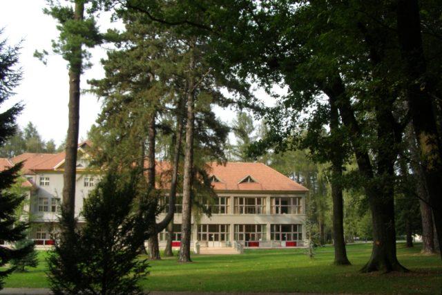 Letité stromy u pavilonu C | foto: Jana Zavřelová
