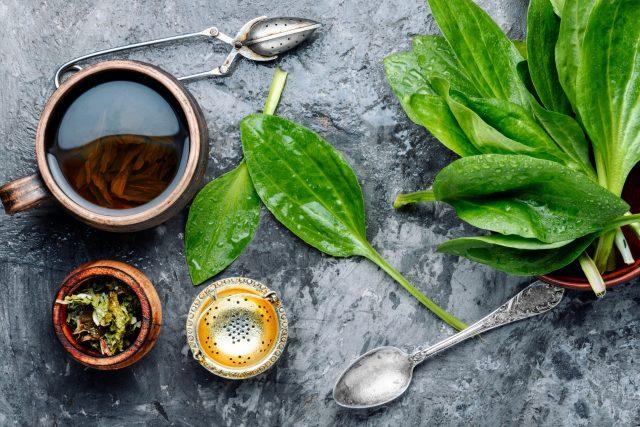 Z jitrocele se dá připravit třeba čaj | foto: Profimedia